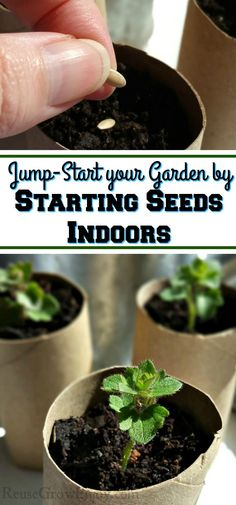 With the right setup and some motivation, you can easily jump-start your garden this year by starting seeds indoors. In can be done as simple as just a...