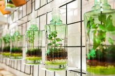80 best Flowers images on Pinterest | Flower, Bloemen and Blossoms Garden Design Magazine Gvine Spheres on