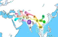 Haplogroup H - This haplogroup is found at a high frequency in South Asia. It is generally rare outside of the South Asia but is common among the Romani people, particularly the H-M82 subgroup. Haplogroup H is frequently found among populations of India, Sri Lanka, Nepal, Pakistan and Maldives. Haplogroup H is a branch of Haplogroup F, and is believed to have arisen in India between 20,000 and 30,000 years ago. Its probable site of introduction is India since it is concentrated there. It…