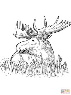 free caribou coloring page mosaics pinterest free color