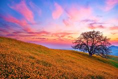 blue sky with sunny pink clouds | ... of morning wildflowers clouds field gold hills pink and wallpaper