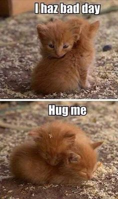 36 Absolutely Adorable And Funny Animals 36 Absolutely Adorable And Funny Animals. More funny animals here. Baby Animals Pictures, Cute Animal Pictures, Animals And Pets, Wild Animals, Baby Pictures, Funny Animal Jokes, Cute Funny Animals, Cute Cats And Kittens, Kittens Cutest