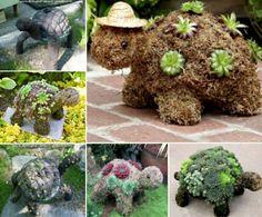 Turtle Succulents Tutorial