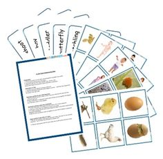 Life Cycle sequence cards