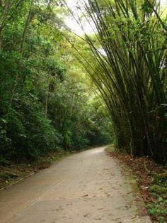 Vía Choroní Edo. Aragua, #Venezuela