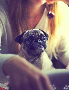 Cute Pug ♥