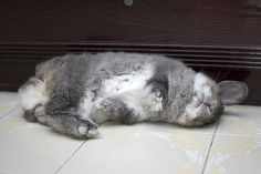 Understanding a rabbit's body language and common postures is helpful in building a relationship with your rabbit...   If  you live closely ...