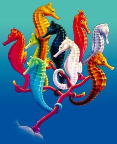 Seahorses    by  Royce McClure    Tumblr...This and That