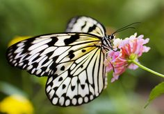 Butterfly Happiness by Bronze Riser