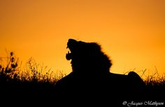African Sunset by Jacques Matthysen on 500px