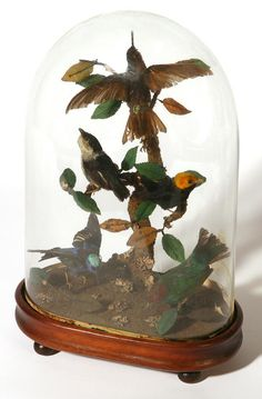 Victorian Domed Bird Topiary