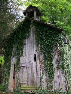 Old Barn with Ivy