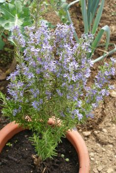 Eco-Gites of Lenault: Freebies in the Garden!