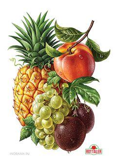 Ананас, виноград, нектарин, маракуйя. Иллюстрация для линейки соков ROTTALER (ООО «Невские Молокопродукты»). http://www.nevcheeses.com
