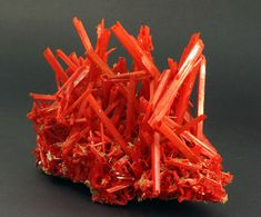 Crocoite, 2010 Pocket, from the Adelaide Mine, Dundas, Tasmania, Australia -AMCP Photo