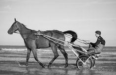https://flic.kr/p/21jnZGf | Sulky sensation | Au bord de l'eau, Plage de Deauville, Normandie - FR