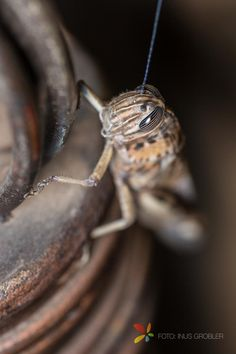 Mar 2 How to Take Macro Pictures with a Single Speedlite - Grasshopper on Stair…