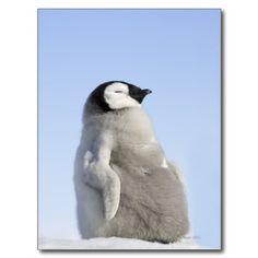 babyemperor Penguin