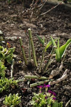 5 Experten-Tipps für die Rosenpflege - Garden Tips For Beginners Garden Care, Cactus House Plants, Natural Farming, Rose Care, Organic Gardening Tips, Gardening For Beginners, Growing Plants, Plant Care, Permaculture