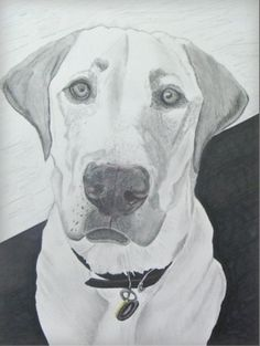 Our dog Apollo done by Jim Joye from http://spotondogportraits.com/