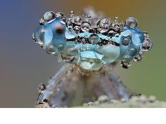 Dew or die -- Photographer's special technique captures small wonder of wet insects.
