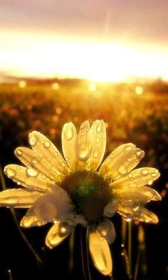 dew drops and sunshine Dew Drops, Rain Drops, Mellow Yellow, Yellow Sun, Belle Photo, My Sunshine, Pretty Pictures, Beautiful World, Beautiful Gorgeous