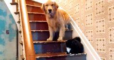 Il cane più fifone del mondo? O il gatto più cattivo del mondo? - http://www.ahboh.it/cane-fifone-mondo-gatto-cattivo-mondo/