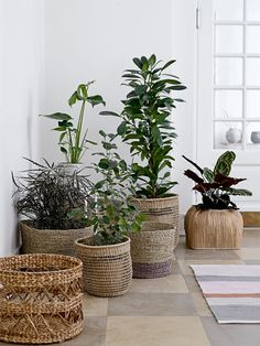 rattan planters and wicker baskets. Available from Out There Interiors