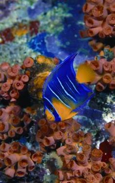 bonaire diving - Bing Images Yes, the fish really are this colorful!