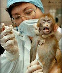 STOP TEST ANIMALS - ANIMALS FREE
