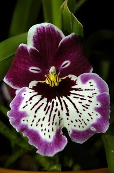 Photographing an Orchid Paradise