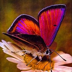 Butterfly Wings, Inktober, Moth, Images, Ladybugs, Photos, Butterflies, Plastic, Garden