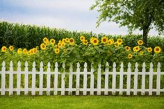 Small white picket fence in flower garden