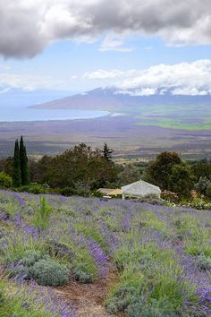 the most picture perfect views of Maui