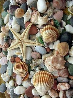Summer Wallpaper, Colorful Wallpaper, Iphone Wallpaper, Sea And Ocean, Shell Crafts, Ocean Art, Beach Scenes, Marine Life, Sea Creatures