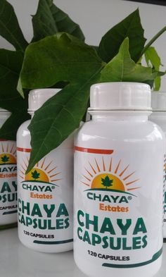 Its properties as a digestive make it a useful plant in gastrointestinal disorders Chaya Plant, Diuretic, Varicose Veins, Lower Cholesterol, Blood Pressure, Metabolism, Disorders, Diabetes, Spinach