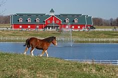 Warm Springs Ranch, breeding farm of the Budweiser Clydesdales, in Boonesville. Call to book your FREE tour. And, make a day trip of it. Spend the morning in Columbia, browsing coffee shops and boutiques, then drive to Warm Springs Farm for an afternoon tour. Then drive to KC for an elegant dinner and an overnight!