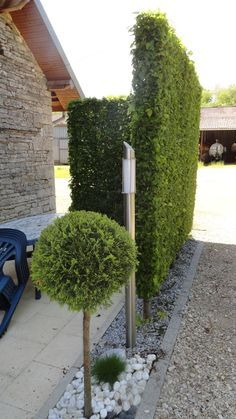 How To Grow A Bamboo Privacy Screen In Containers Bamboo