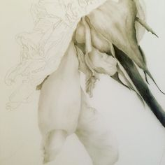 Slowly and gently working away on my 'Last Days' series. I'll be working on this and a painting at the #artsbox over the next 4 weeks of my residency. I'll post details tomorrow after bump in  @artsandculturemcc . #melbourneart #melbourneartist #workinprogress #wip #australianart #australianartist #draw #drawing #pencil #graphite #sketch #sketch_daily  #sketchbook  #instagramart #instagramhub #instagramartist #instaart #instaartist #art #gallery #myart #nature #naturelovers #natureart…