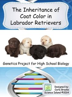 This high school Biology Genetics Project uses puppies to reinforce the concepts of Mendelian inheritance patterns and introduces epistasis as well. Biology Projects, Biology Lessons, Science Lessons, Science Education, Science Activities, Life Science, Science Ideas, Science Fair, Biology Classroom