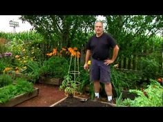 How To: Plant Tomatoes Laying Down from Garden Fresh with Doug Jimerson. Click: http://www.craftsy.com/ext/Pinterest_49_3