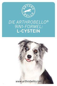 Als Bestandteil von Elastin, welches ein grundlegender Baustein für die Sehnen Ihres Vierbeiners ist, beteiligt sich der Wirkstoff L-Cystein grundlegend bei der Verbesserung der Beweglichkeit Ihres Hundes. Dogs, Movies, Movie Posters, Animals, Art, Pet Dogs, Building Stone, Art Background, Animales