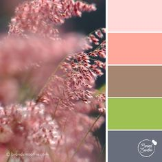 Silky Wildflower colour palette by Brand Smoothie