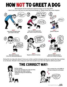 How not to greet a dog; general dog information.