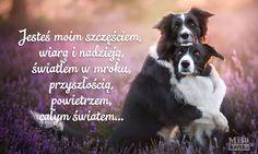 Jesteś moim światłem – kartka miłosna #walentynki #polska #miłość #kochanie #psy #piesek #poland #kartki #valentines #love #kocham #serce #relationship #cytaty