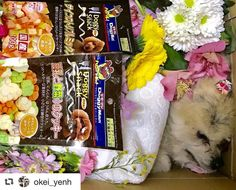 拡散お願いします 東大阪市若江付近で残念ながら虹の橋を渡ったポメラニアンちゃんがいます 旅立つ前に飼い主さんと最後のお別れをさせてあげたいです お心当たりの方は河内警察署までお願いいたします  #repost @maigo_dog_kinki via @PhotoAroundApp  #Repost @maigo_dog (@get_repost)   迷子犬情報の拡散目的以外での転載はご遠慮ください  #事故で亡くなったワンちゃんの飼い主さんを探しています . #迷子犬#迷い犬 #詳細はリポスト元へ #大阪府 #河内警察署 に届出  #Repost @okei_yenh (@get_repost)  緊急拡散お願いします 12/6 今日夕方17時20分頃に 東大阪市若江本町一丁目4-21の交差点で ポメラニアンが交通事故に遭い亡くなっていました  巡り巡って私の所に情報が入ったので 確認に行きました カラーはクリームだと思います お年寄りな感じで 毛はカットして少し伸びた感じでピンクのリボンをつけていました…
