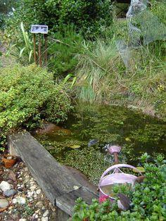 Superbe Frog Pond