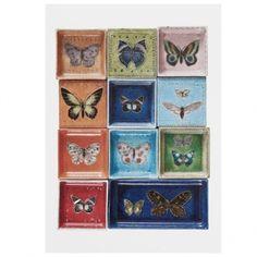 Butterflies poster by Rut Bryk. Butterfly Art, Butterflies, Scandinavian Living, Nordic Design, Ceramic Artists, Online Shopping Stores, Illustration Art, Illustrations, Branding Design