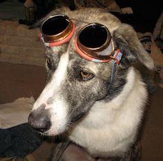 Steampunk dog fashion!