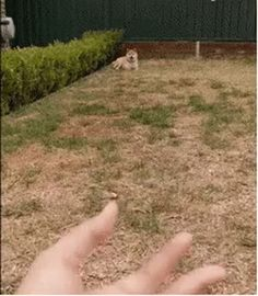 Dog knows what to do next #dog #hand